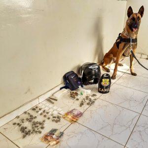 Parte das drogas foram encontradas pelo cão farejador Iron, em uma casa abandonada usada pelos traficantes